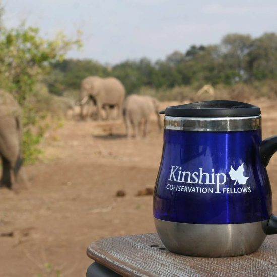 Kinship Conservation Fellows Branding, Chicago, IL