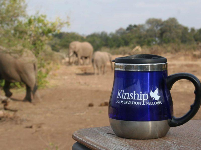 Kinship Conservation Fellows Branding, Chicago, IL
